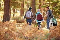 的家庭远足通过森林,加利福尼亚,美国的后面观点 免版税图库摄影