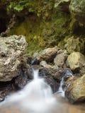 从洞的小溪在森林里 库存照片