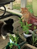 的小猫彼此了解 免版税图库摄影