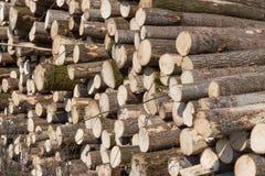 的山松和准备好云杉的日志被装载在木材上 图库摄影
