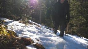 的年轻徒步旅行者走向在多雪的小山的照相机的低角度观点在山松步行在雪倾斜的森林人在 股票录像