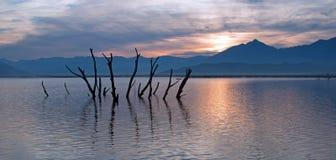 死的戳在遭受干旱的湖伊莎贝拉外面的树干和分支在内华达山山的日出在中央加州 免版税图库摄影