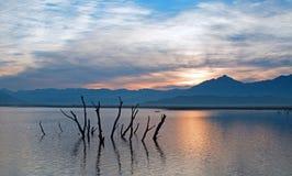 死的戳在遭受干旱的湖伊莎贝拉外面的树干和分支在内华达山山的日出在中央加州 库存图片