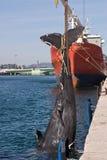 死的抹香鲸 免版税图库摄影