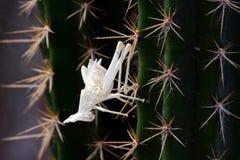 死的昆虫 图库摄影