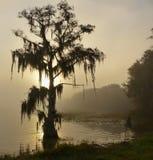 轻的有薄雾的早晨 免版税库存照片