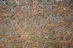 死的杉木针纹理 库存照片