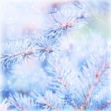 冻结的杉树背景 免版税库存图片