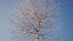 冻结的树上面 影视素材