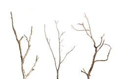 死的树分支没有在白色隔绝的叶子的 库存照片