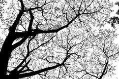 死的树剪影 免版税库存照片