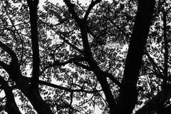 死的树剪影 库存图片