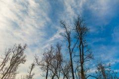 死的树和分支 免版税库存图片