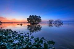 死的树和太阳和海和天空和树 库存照片