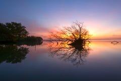 死的树和太阳和海和天空 库存照片