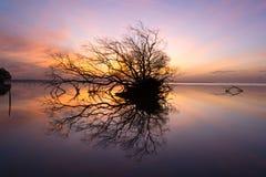 死的树和太阳和海和天空 免版税图库摄影