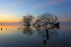 死的树和太阳和海和天空 免版税库存照片