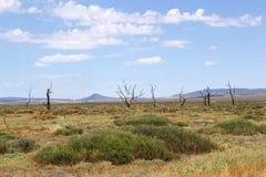 死的树和山,碎片全景排列,澳大利亚 免版税库存图片