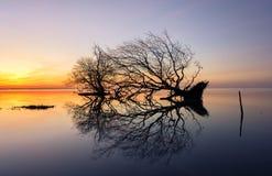 死的树和海 库存图片