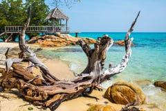 死的树和绿松石海 免版税库存照片
