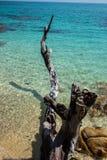死的树和绿松石海 免版税库存图片