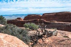 死的树在拱门国家公园,犹他 免版税图库摄影
