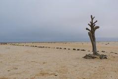 死的树在纳米比亚 库存图片