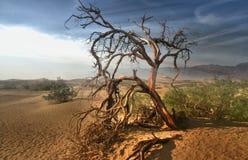 死的树在莫哈韦沙漠-死亡谷加利福尼亚 免版税库存图片
