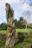 死的树在蒙扎公园 免版税库存图片