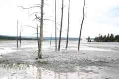 死的树在黄石公园 免版税库存图片