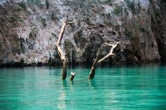 死的树在绿色湖 库存照片