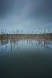 死的树场面  免版税图库摄影