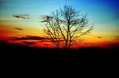 死的树天空 免版税图库摄影