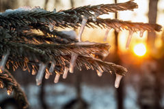 冻结的树枝在冬天森林 库存照片