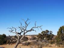 死的树沙漠美丽的拱门国家公园 免版税库存图片