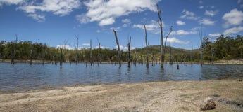 死的树湖 图库摄影
