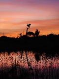 死的树的伟大蓝色的苍鹭的巢土地在美好的日落 免版税库存照片