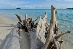死的树的图象在热带海滩的 图库摄影