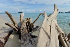 死的树的图象在热带海滩的 免版税库存图片
