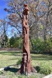 死的树艺术 库存照片