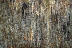 死的树近 免版税库存照片