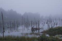 死的树雾 免版税库存照片