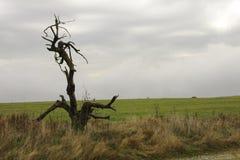 死的树颜色 免版税库存图片