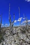 死的树,全球性变暖 免版税库存照片