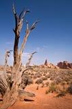 死的树,曲拱国家公园,犹他 库存照片