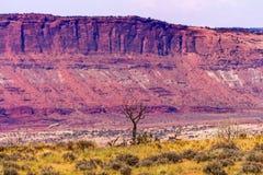 死的树黄色默阿布非难拱门国家公园犹他 图库摄影