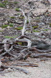 死的树 免版税库存照片