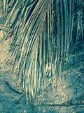死的棕榈叶 免版税库存图片