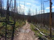 死的森林足迹 库存图片