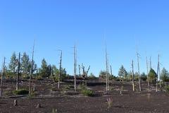 死的森林,扎尔巴奇克火山火山 图库摄影